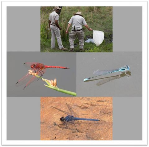 Insects Practical Weekend – 04 to 06 November 2016