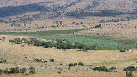 Wetlands weekend March 12 – 14 2021 at Kgaswane